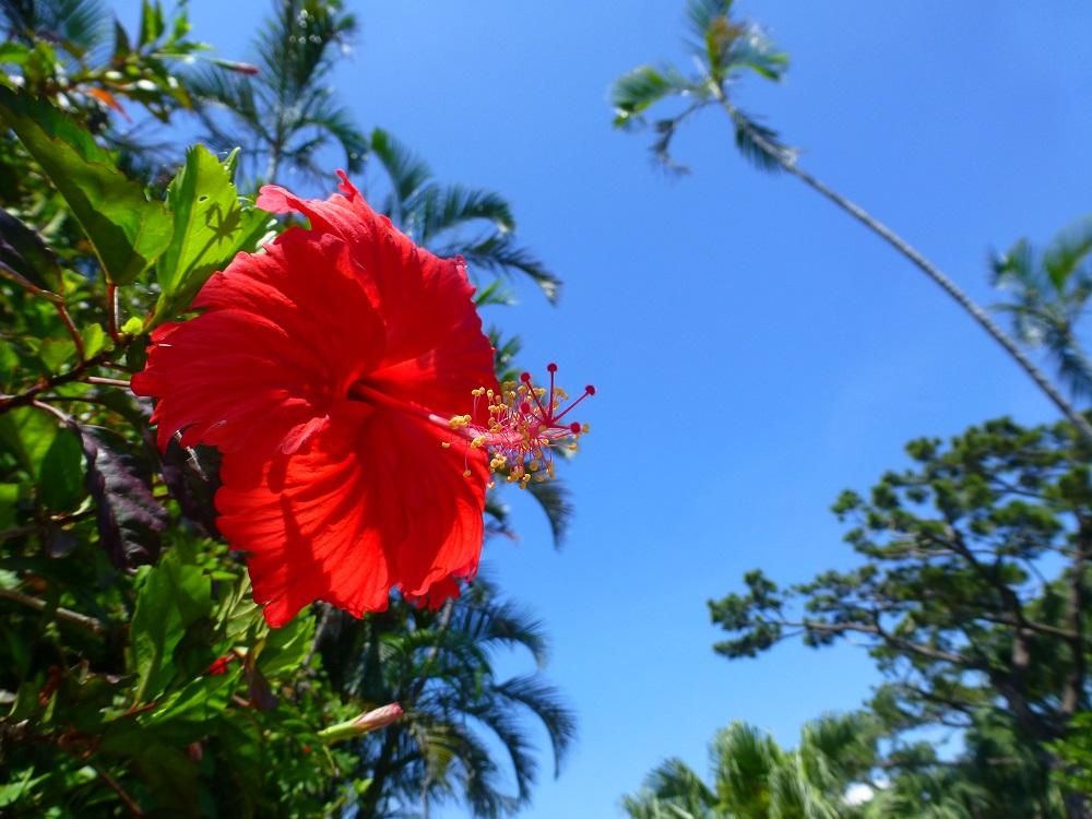 はいむるぶし小浜島のブログ