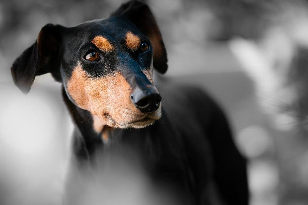 子供が犬に噛まれたときの対処法