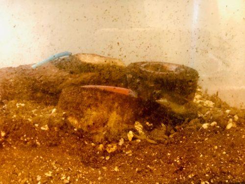 カブトムシを水槽で飼育